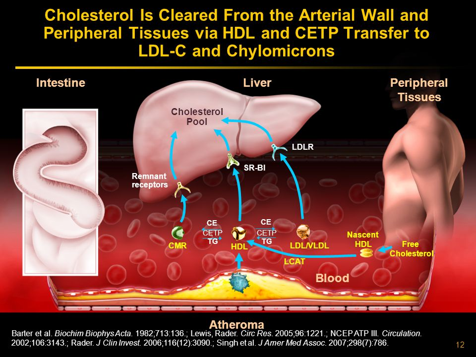 12 Atheroma Liver Intestine Peripheral Tissues Cholesterol Is Cleared From the Arterial Wall and Peripheral Tissues via HDL and CETP Transfer to LDL-C and Chylomicrons LDLR SR-BI Free Cholesterol Remnant receptors Barter et al.