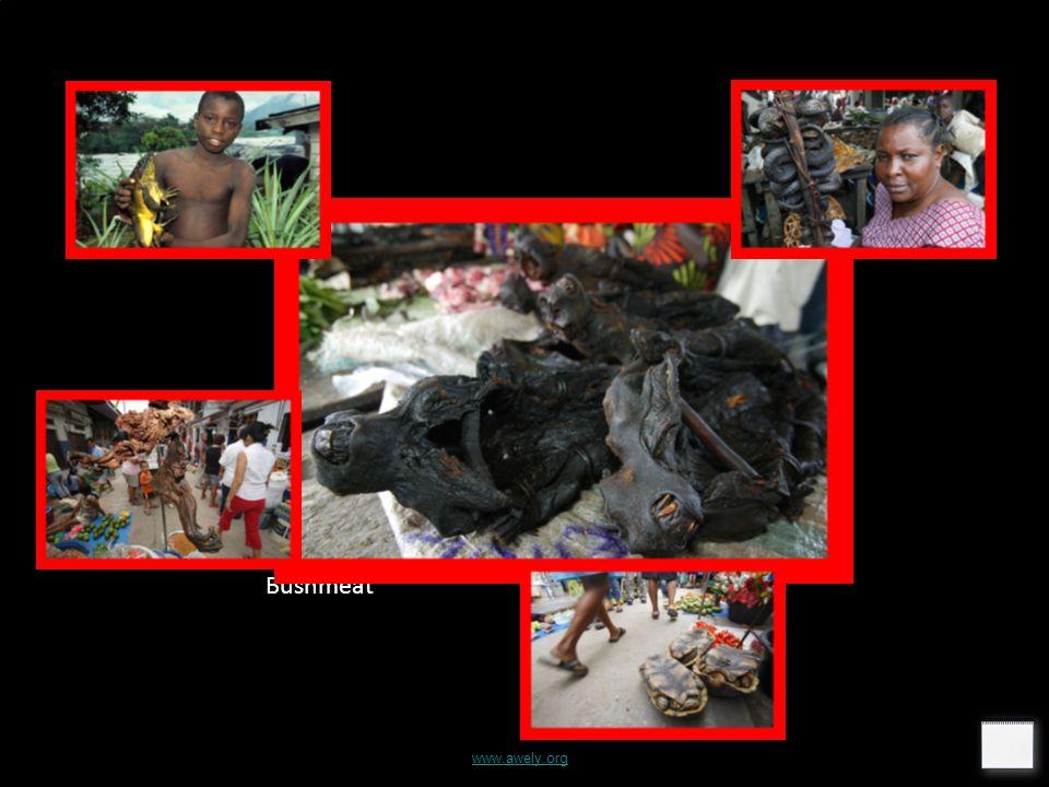 Bushmeat www.awely.org
