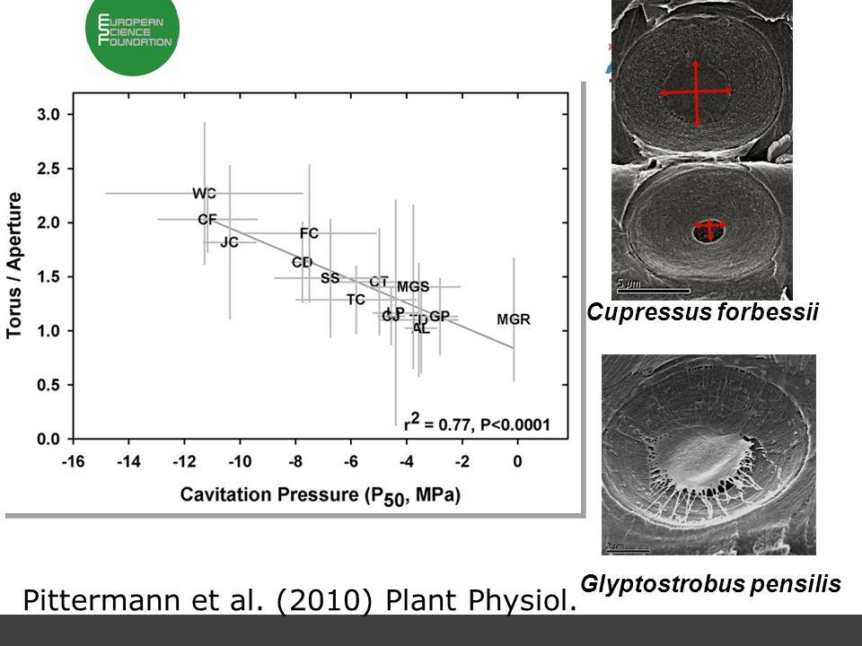 Cupressus forbessii Glyptostrobus pensilis Pittermann et al. (2010) Plant Physiol.