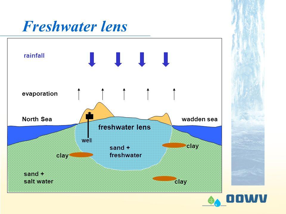 Ankauf & Aufforstung Kooperation mit Landwirten Ökologischer Landbau Freshwater lens rainfall evaporation North Sea clay sand + salt water freshwater