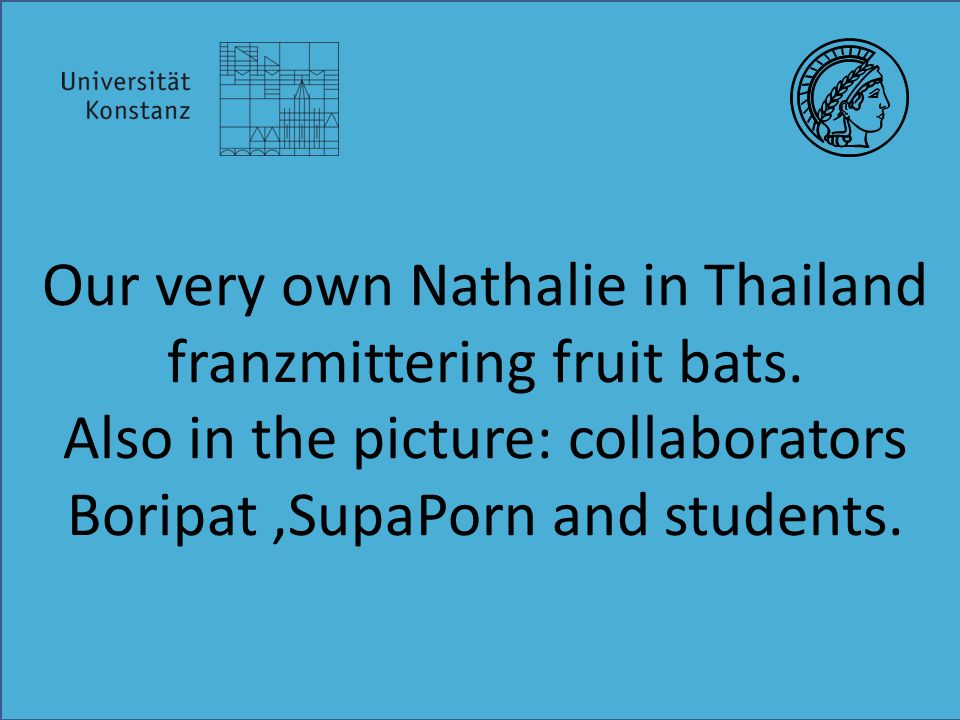 Our very own Nathalie in Thailand franzmittering fruit bats.