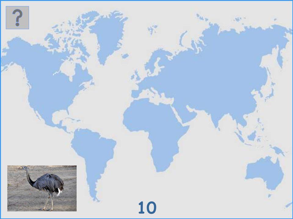 9 African Penguin