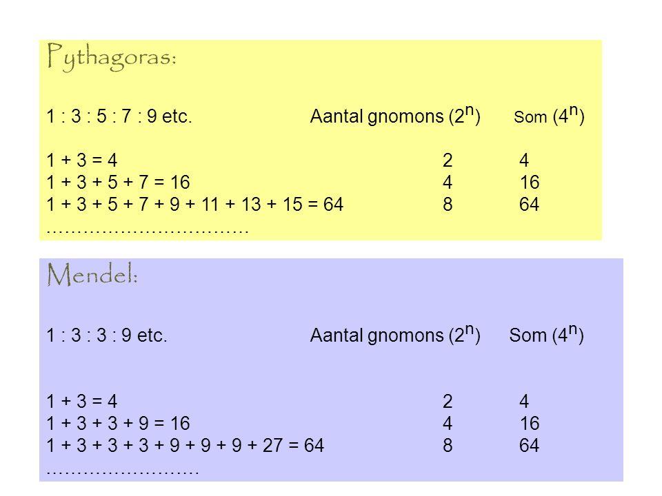 Pythagoras: 1 : 3 : 5 : 7 : 9 etc.Aantal gnomons (2 n ) Som (4 n ) 1 + 3 = 42 4 1 + 3 + 5 + 7 = 164 16 1 + 3 + 5 + 7 + 9 + 11 + 13 + 15 = 64 8 64 …………………………… Mendel: 1 : 3 : 3 : 9 etc.Aantal gnomons (2 n )Som (4 n ) 1 + 3 = 42 4 1 + 3 + 3 + 9 = 164 16 1 + 3 + 3 + 3 + 9 + 9 + 9 + 27 = 648 64 …………………….