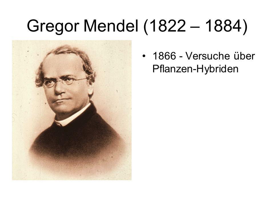 Gregor Mendel (1822 – 1884) 1866 - Versuche über Pflanzen-Hybriden