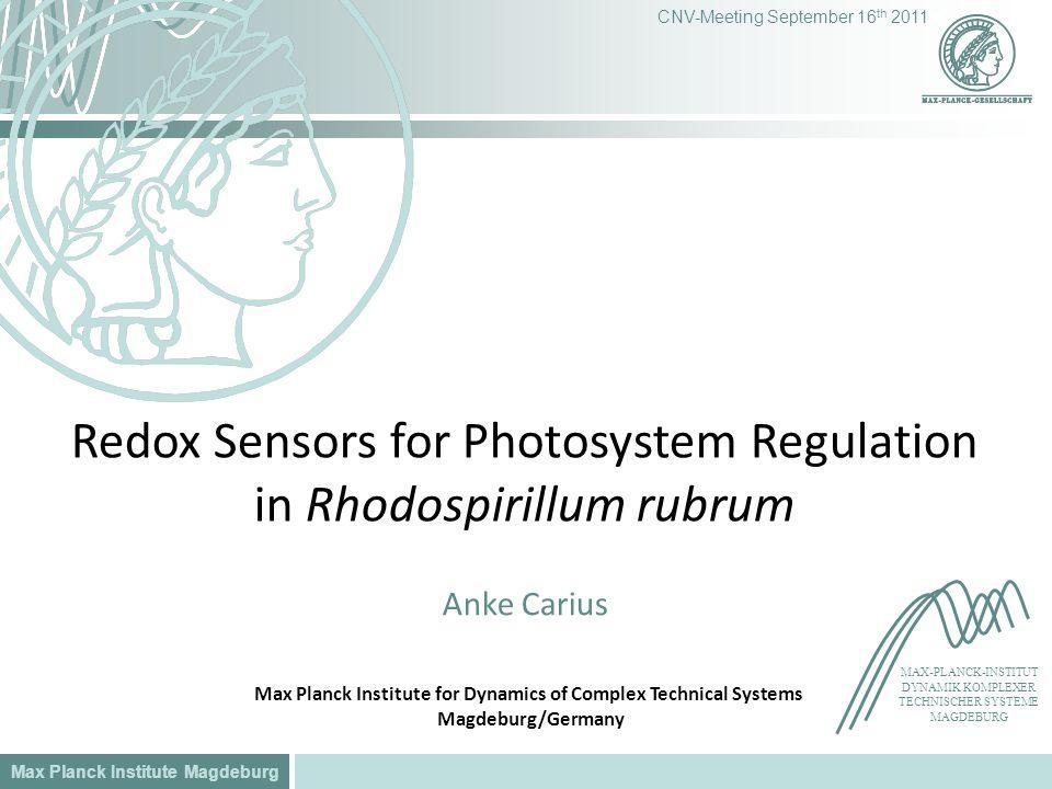 Max Planck Institute Magdeburg CNV-Meeting September 16 th 2011 Redox Sensors for Photosystem Regulation in Rhodospirillum rubrum Anke Carius MAX-PLAN