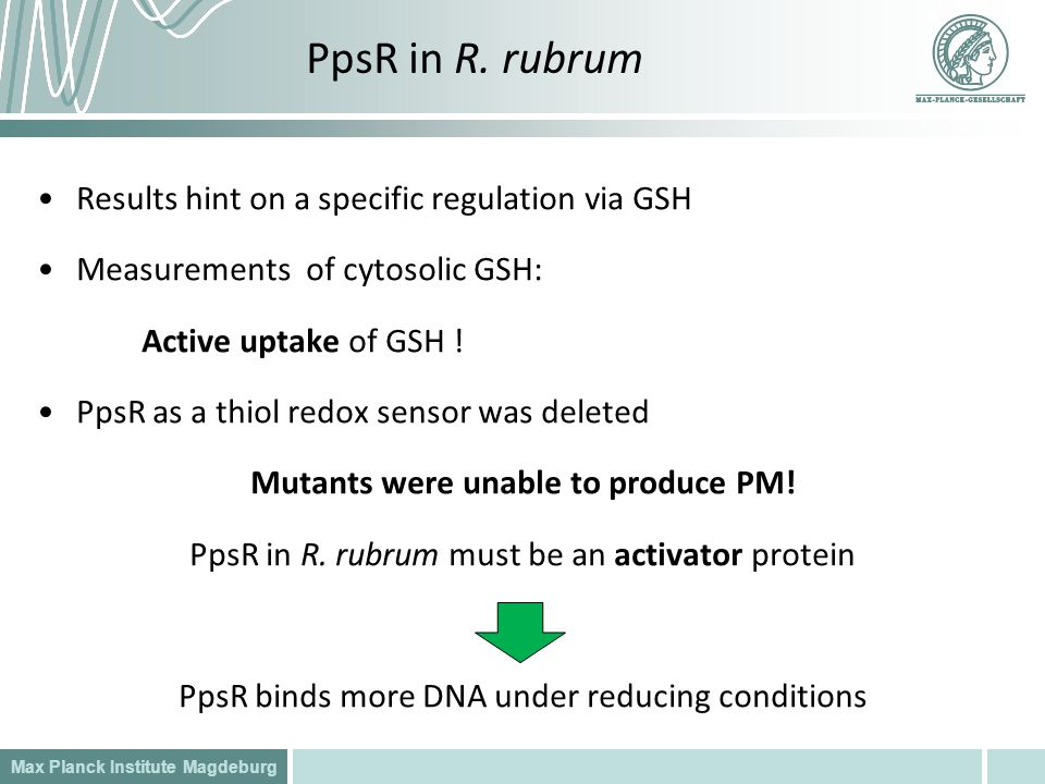 Max Planck Institute Magdeburg PpsR in R. rubrum Results hint on a specific regulation via GSH Measurements of cytosolic GSH: Active uptake of GSH ! P