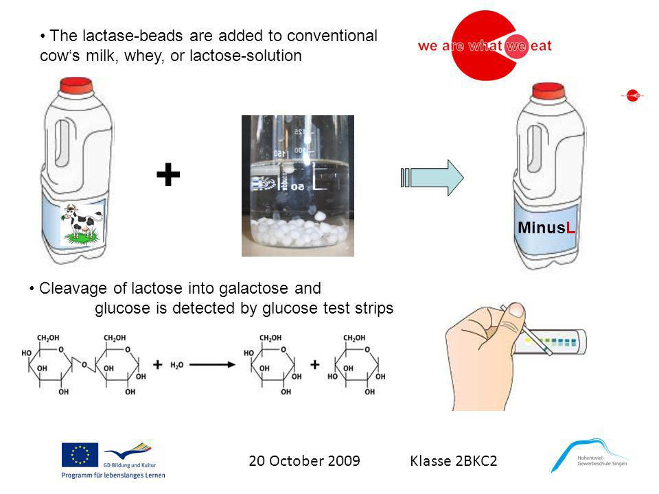 20 October 2009 Klasse 2BKC2 The lactase-beads are added to conventional cows milk, whey, or lactose-solution Cleavage of lactose into galactose and g