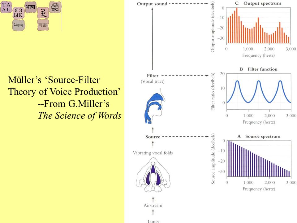25 Müllers Source-Filter Theory of Voice Production --From G.Millers The Science of Words