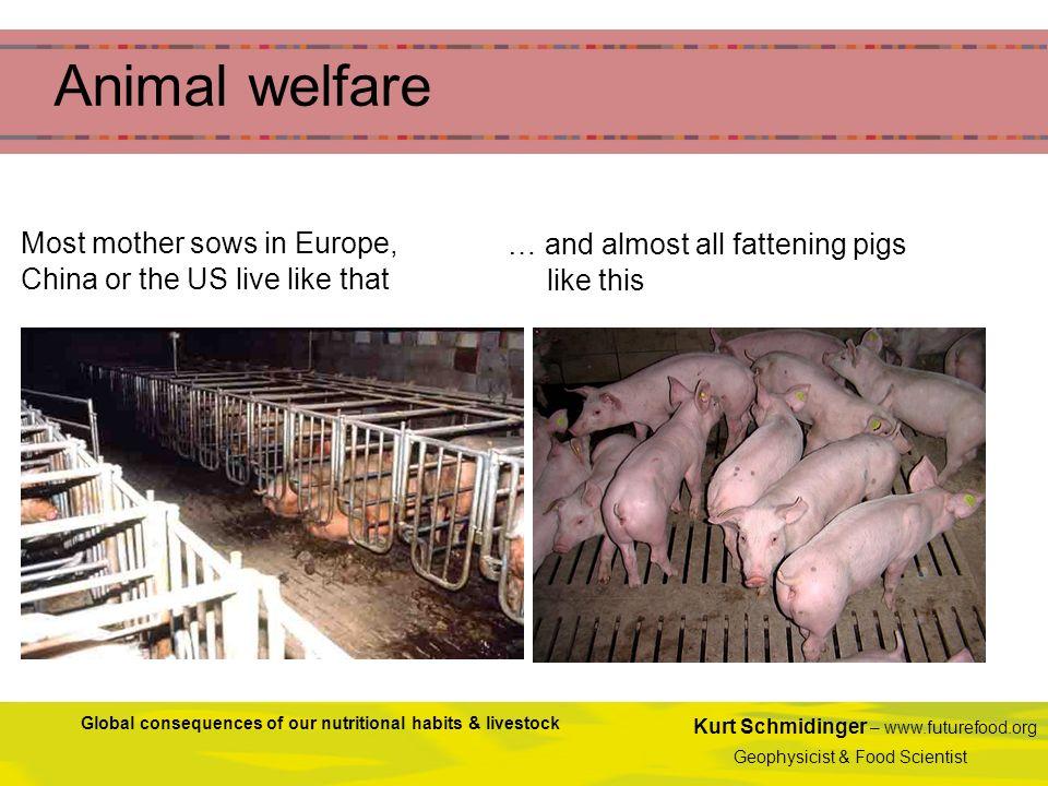 Kurt Schmidinger – www.futurefood.org Geophysicist & Food Scientist Global consequences of our nutritional habits & livestock Animal welfare Most moth