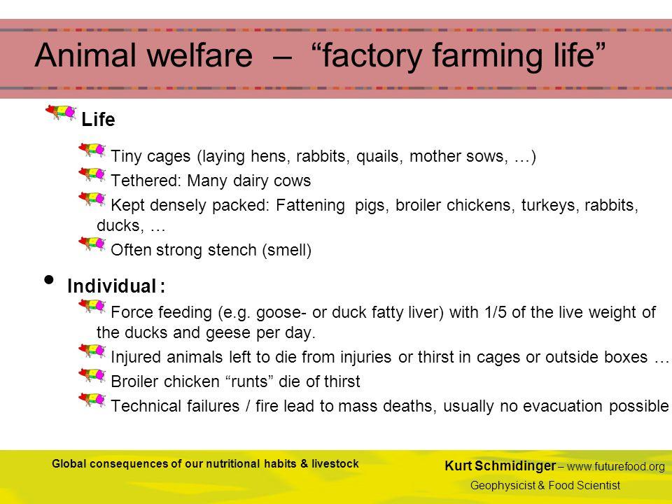 Kurt Schmidinger – www.futurefood.org Geophysicist & Food Scientist Global consequences of our nutritional habits & livestock Animal welfare – factory