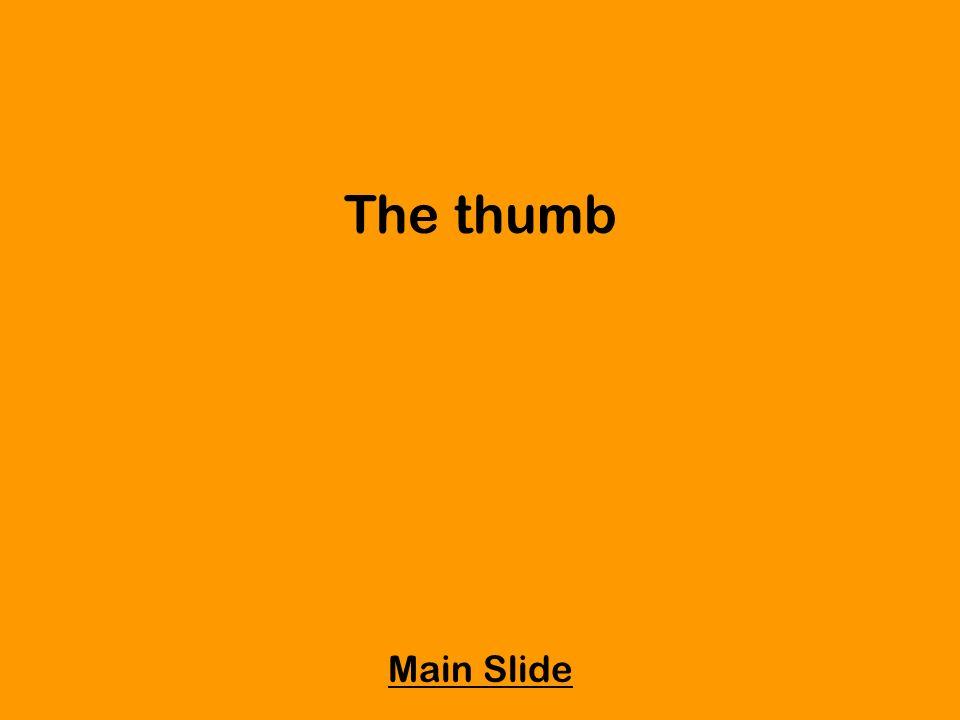 The thumb Main Slide
