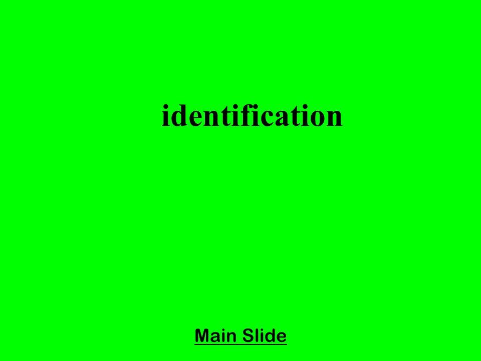 Main Slide identification