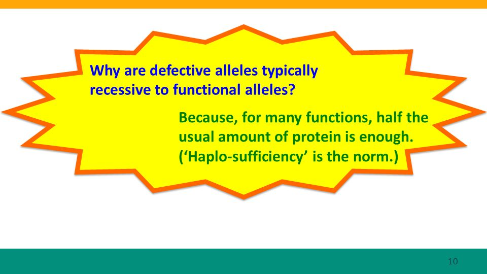 Why are defective alleles typically recessive to functional alleles.