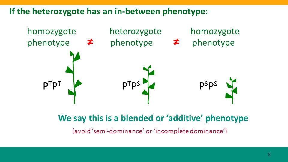 If the heterozygote has an in-between phenotype: P T P T P T P S P S P S homozygote heterozygote homozygote phenotype phenotype phenotype (avoid semi-