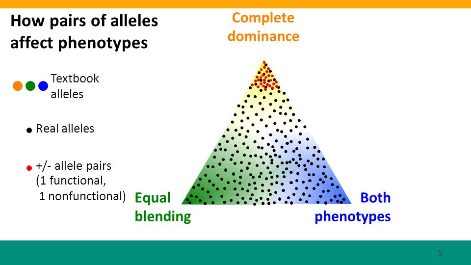 Equal blending Both phenotypes How pairs of alleles affect phenotypes Textbook alleles Real alleles +/- allele pairs (1 functional, 1 nonfunctional) Complete dominance 9