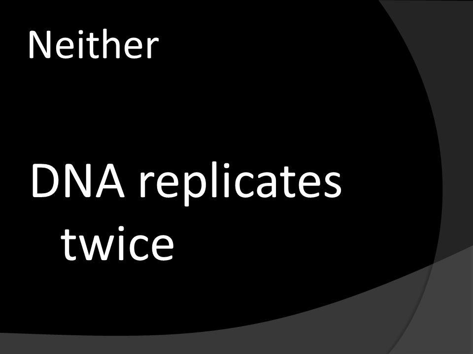 Neither DNA replicates twice