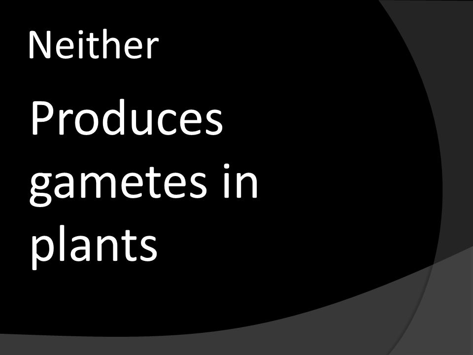Neither Produces gametes in plants