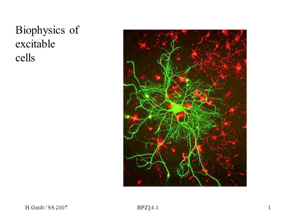 H.Gaub / SS 2007BPZ§4.132 Synaptic-vesicle and plasma-membrane proteins important for vesicle docking and fusion