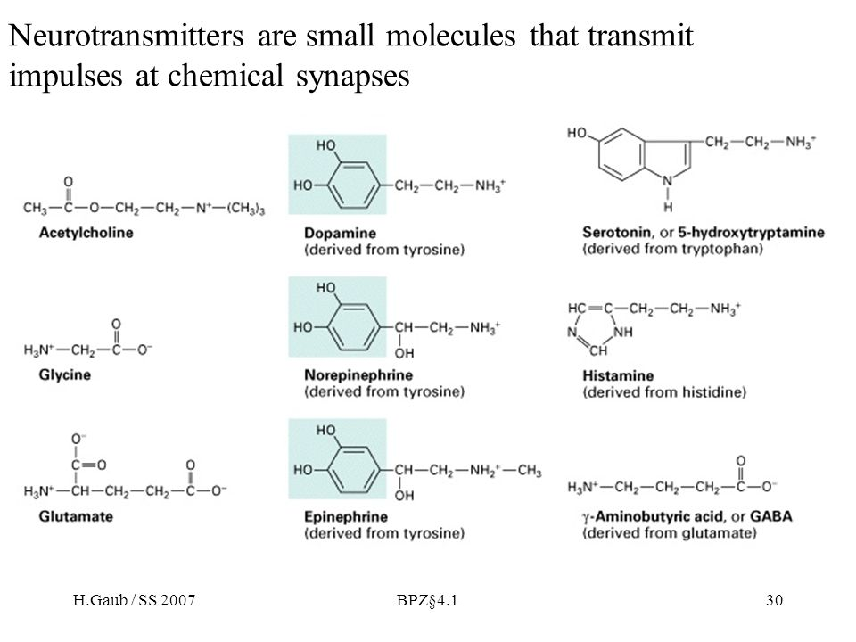 H.Gaub / SS 2007BPZ§4.130 Neurotransmitters are small molecules that transmit impulses at chemical synapses