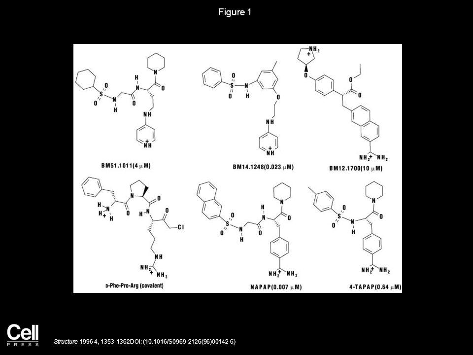 Figure 1 Structure 1996 4, 1353-1362DOI: (10.1016/S0969-2126(96)00142-6)