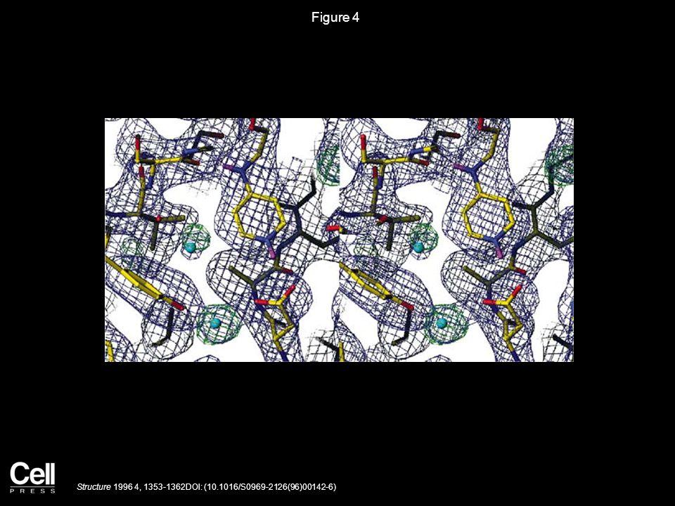 Figure 4 Structure 1996 4, 1353-1362DOI: (10.1016/S0969-2126(96)00142-6)