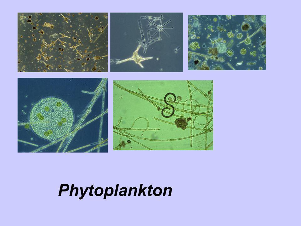 Phytoplankton dynamics in lake Scharmützelsee 1993-2005 Data: Zippel, Hoehn – LBH)