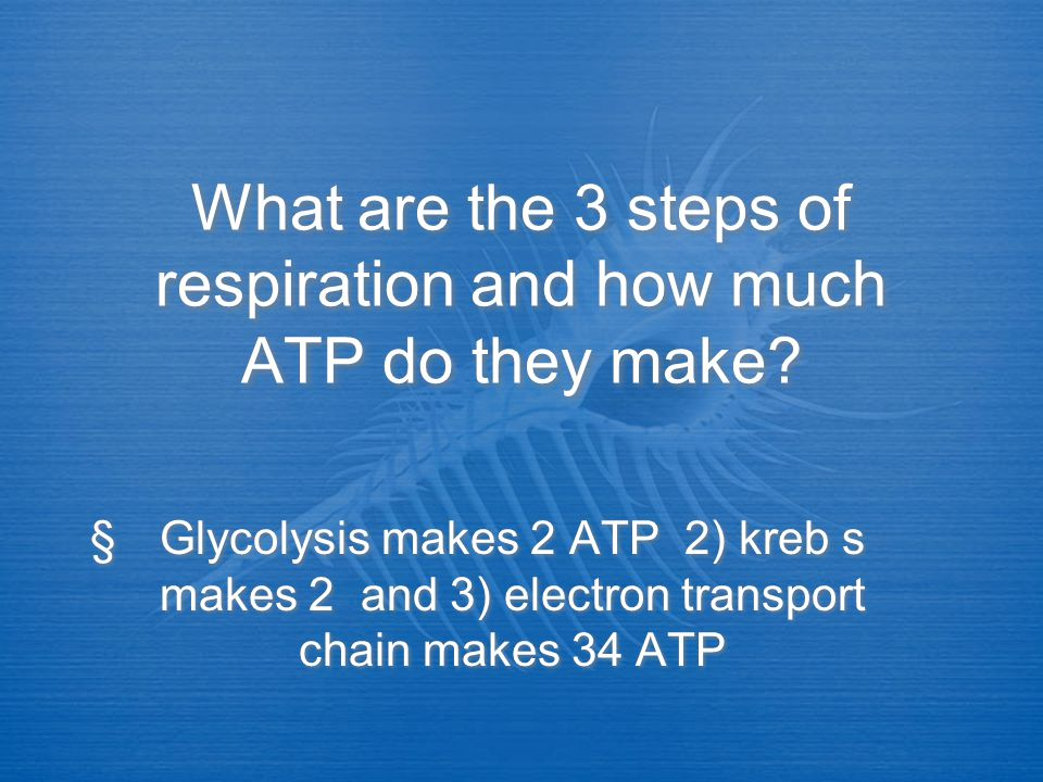 Which 2 steps of respiration require oxygen? Krebs and electron transport chain