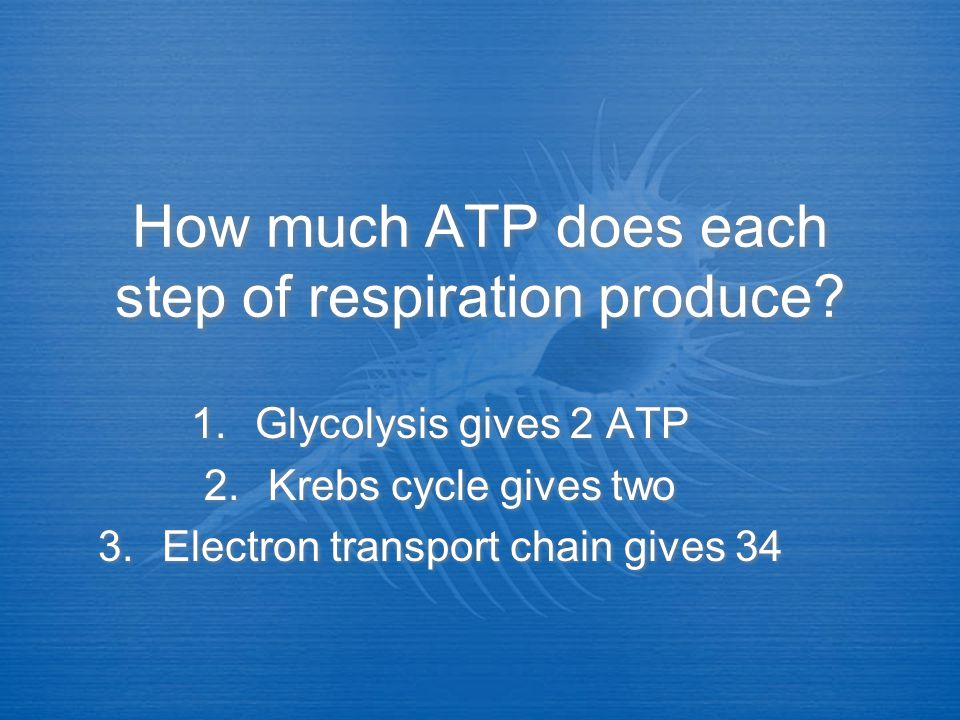 Which step of respiration produces the most ATP? Electron transport chain