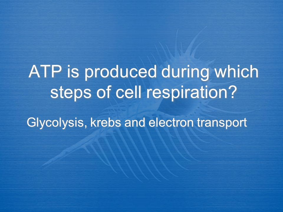What is anaerobic respiration? No oxygen available, glycolysis keeps repeating over and over