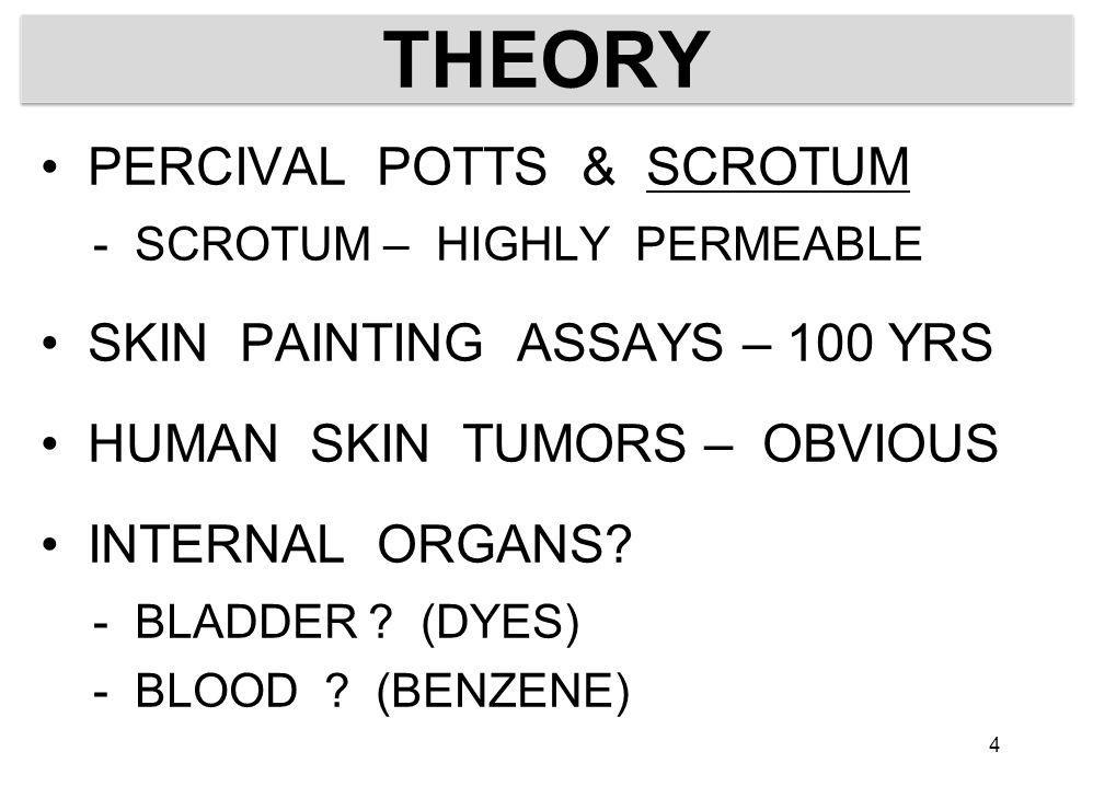 THEORY PERCIVAL POTTS & SCROTUM - SCROTUM – HIGHLY PERMEABLE SKIN PAINTING ASSAYS – 100 YRS HUMAN SKIN TUMORS – OBVIOUS INTERNAL ORGANS? - BLADDER ? (