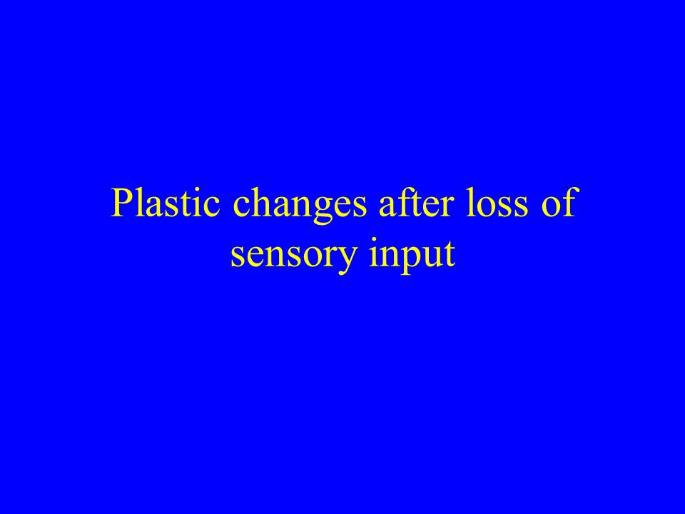 Plastic changes after loss of sensory input