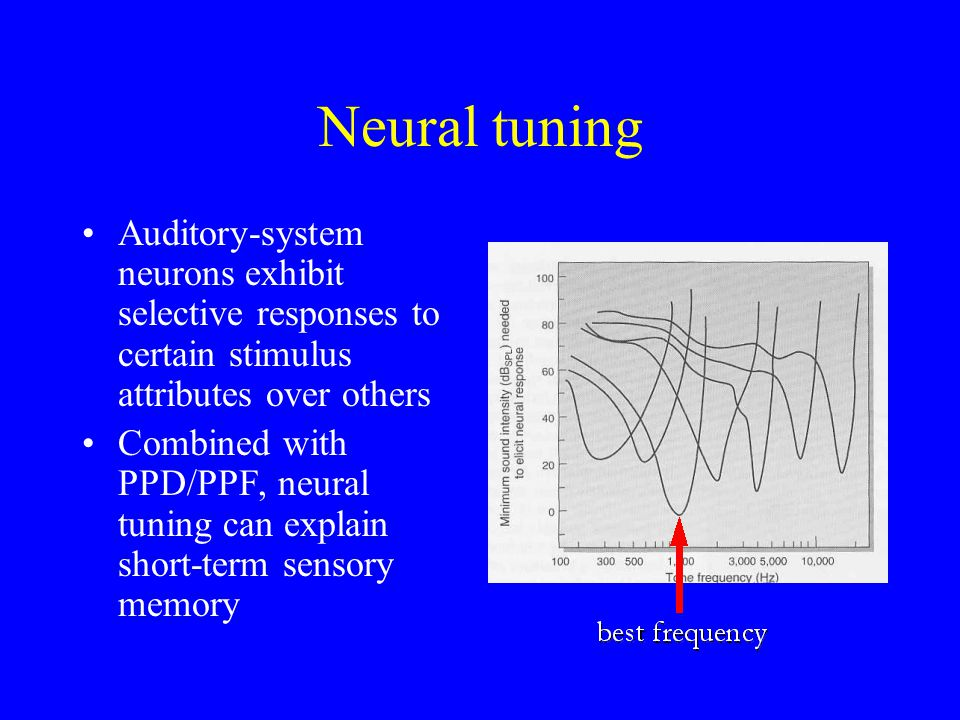 Neural tuning Auditory-system neurons exhibit selective responses to certain stimulus attributes over others Combined with PPD/PPF, neural tuning can explain short-term sensory memory