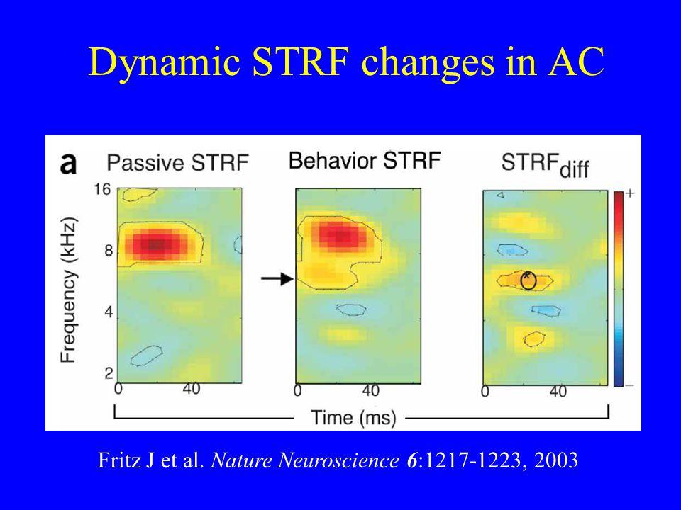 Dynamic STRF changes in AC Fritz J et al. Nature Neuroscience 6:1217-1223, 2003