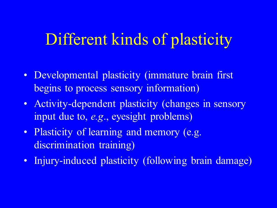 Different kinds of plasticity Developmental plasticity (immature brain first begins to process sensory information) Activity-dependent plasticity (changes in sensory input due to, e.g., eyesight problems) Plasticity of learning and memory (e.g.