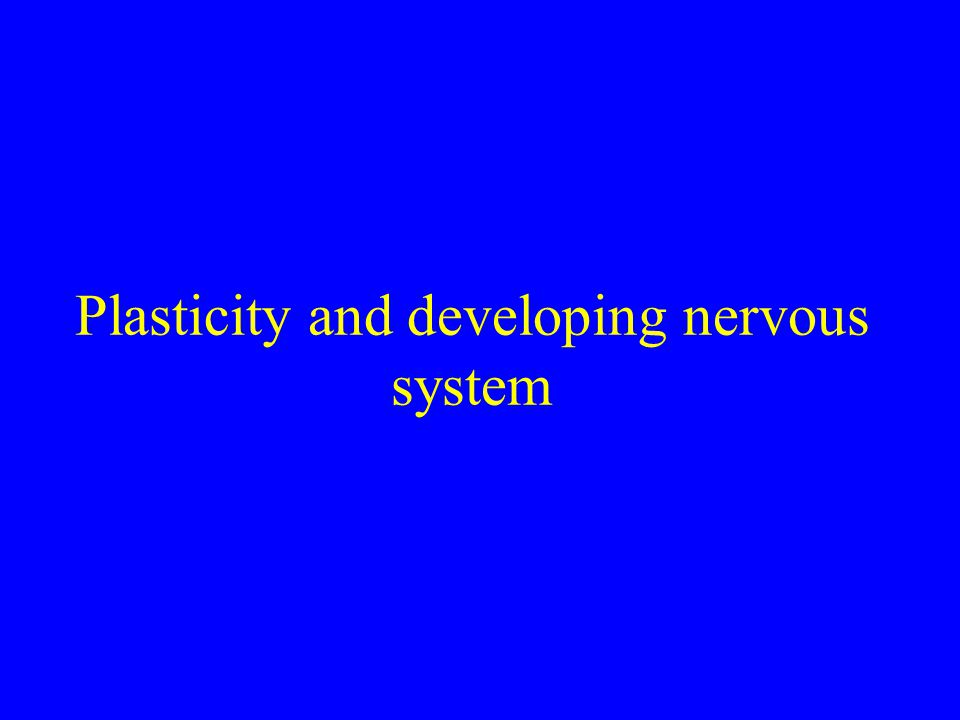 Plasticity and developing nervous system