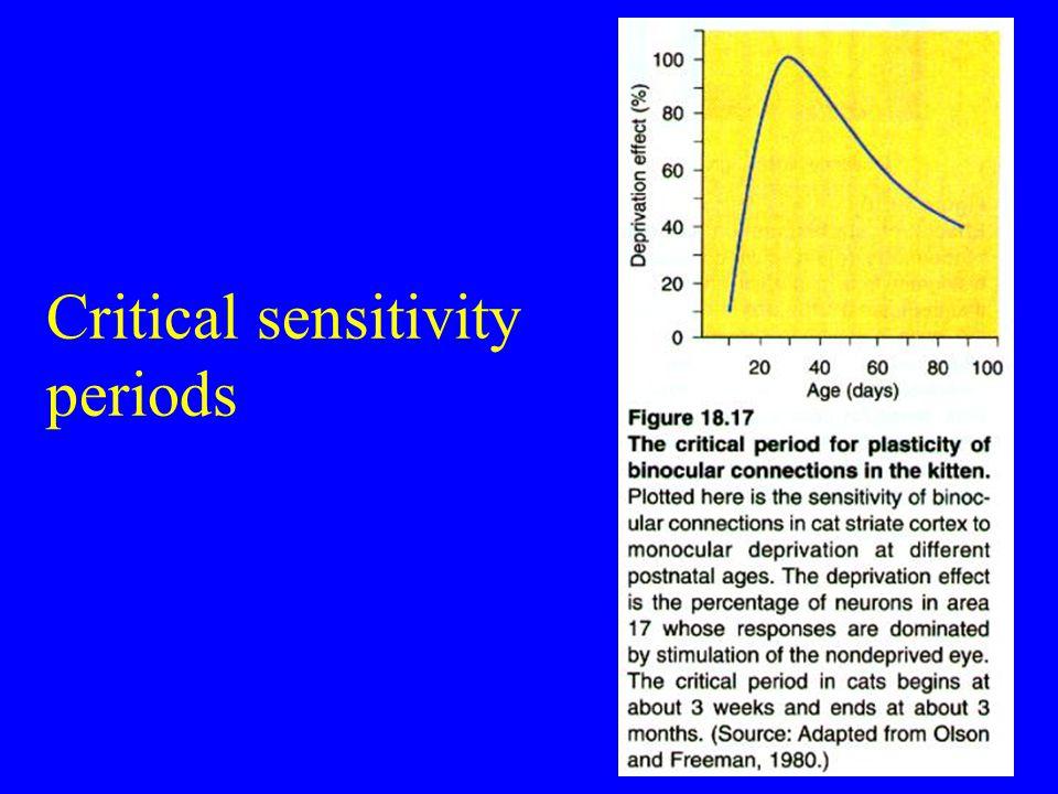 Critical sensitivity periods