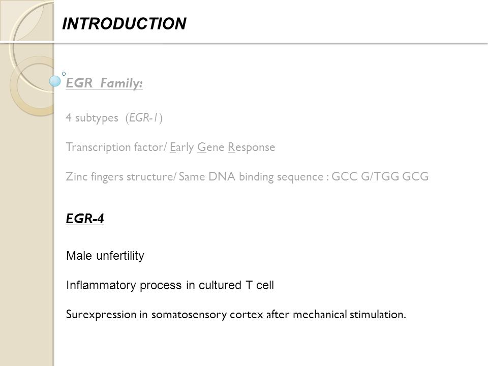 EGR Family: 4 subtypes (EGR-1) Transcription factor/ Early Gene Response Zinc fingers structure/ Same DNA binding sequence : GCC G/TGG GCG INTRODUCTION EGR-4 Male unfertility Inflammatory process in cultured T cell Surexpression in somatosensory cortex after mechanical stimulation.