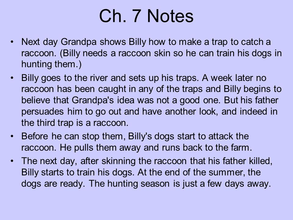 Ch. 7 Notes Next day Grandpa shows Billy how to make a trap to catch a raccoon. (Billy needs a raccoon skin so he can train his dogs in hunting them.)