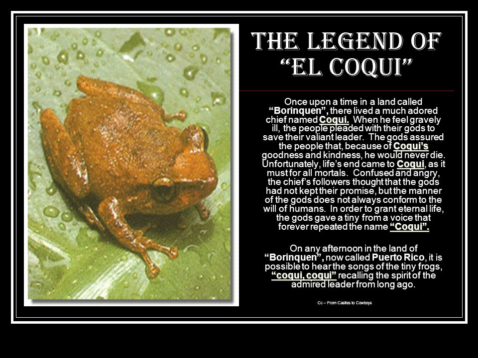 The Legend of El Coqui Coqui.Coquis Coqui Coqui.