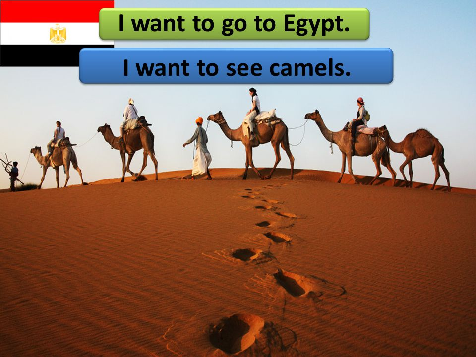I want to go to Egypt. I want to see camels.