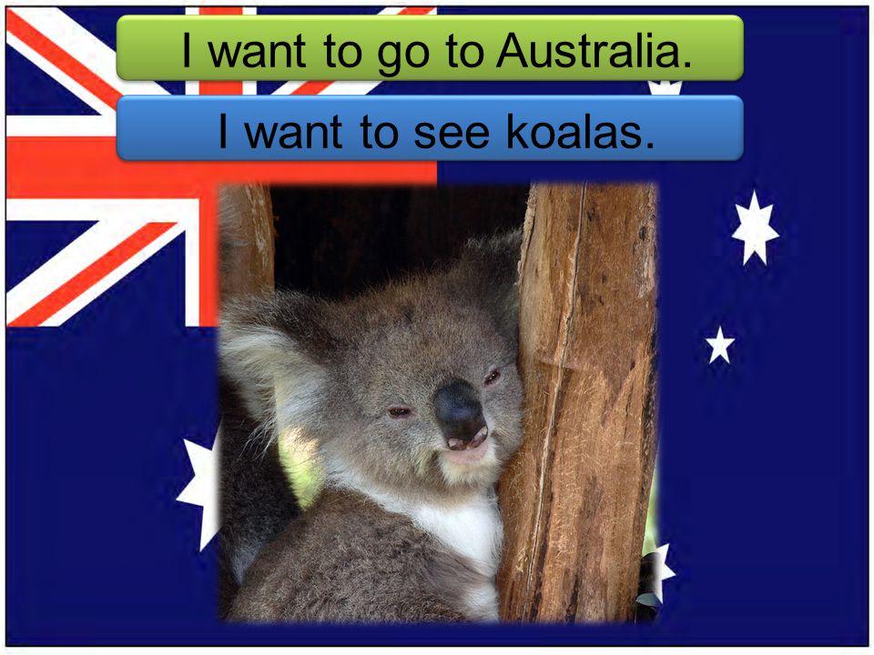 I want to go to Australia. I want to see koalas.