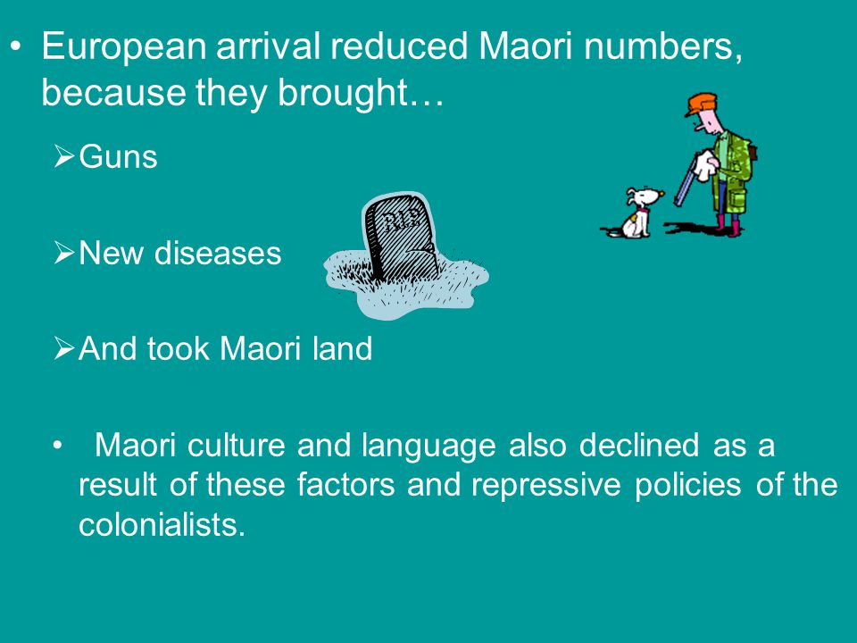 European arrival reduced Maori numbers, because they brought… Guns New diseases And took Maori land Maori culture and language also declined as a result of these factors and repressive policies of the colonialists.