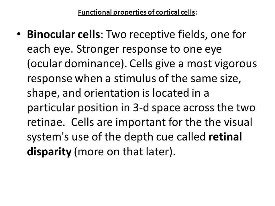Functional properties of cortical cells: Binocular cells: Two receptive fields, one for each eye. Stronger response to one eye (ocular dominance). Cel