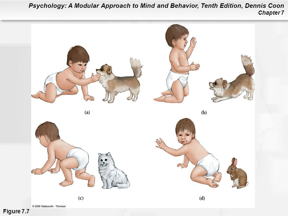 Psychology: A Modular Approach to Mind and Behavior, Tenth Edition, Dennis Coon Chapter 7 Figure 7.7