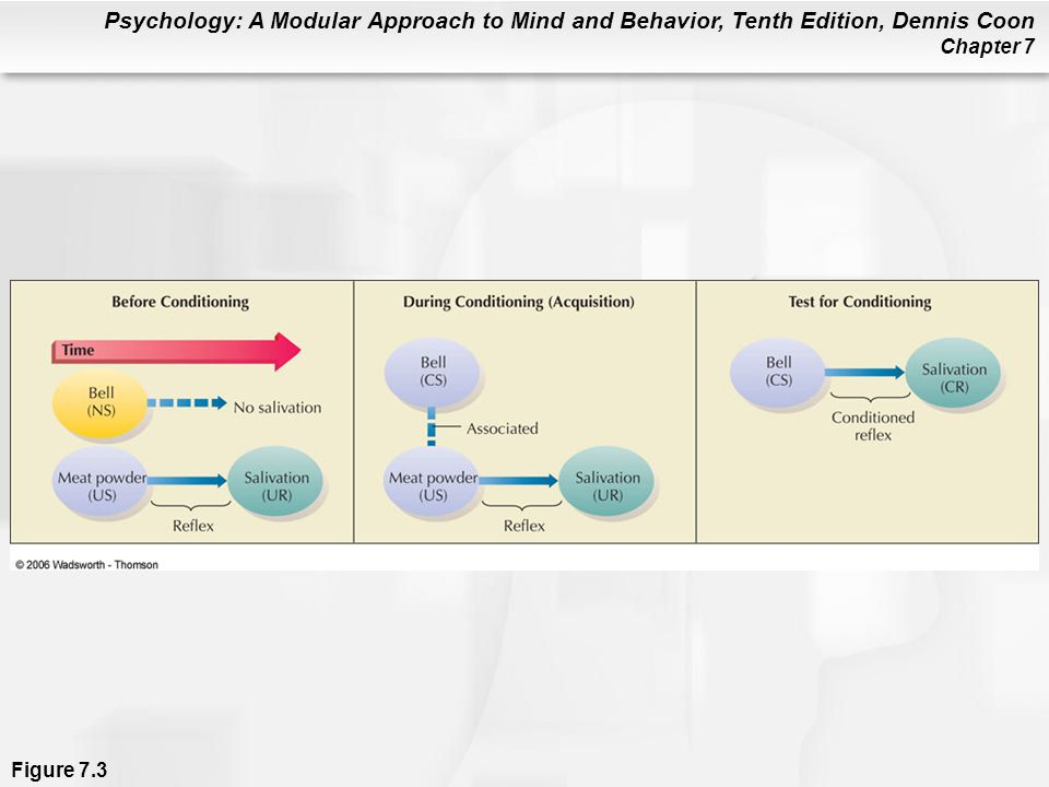 Psychology: A Modular Approach to Mind and Behavior, Tenth Edition, Dennis Coon Chapter 7 Figure 7.3