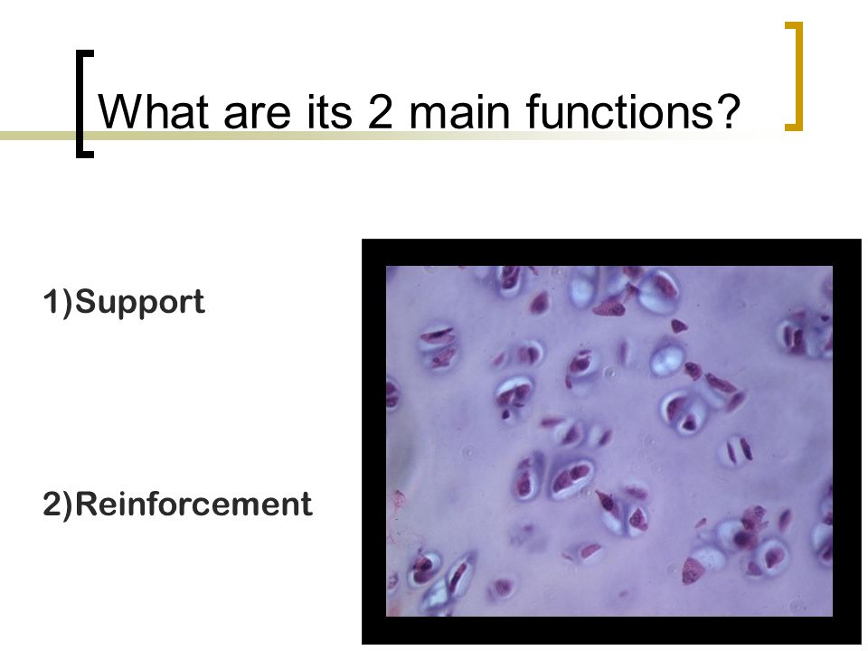 What are its 2 main functions? 1)Support 2)Reinforcement
