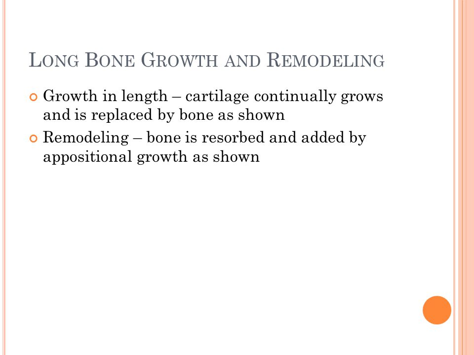 L ONG B ONE G ROWTH AND R EMODELING Growth in length – cartilage continually grows and is replaced by bone as shown Remodeling – bone is resorbed and