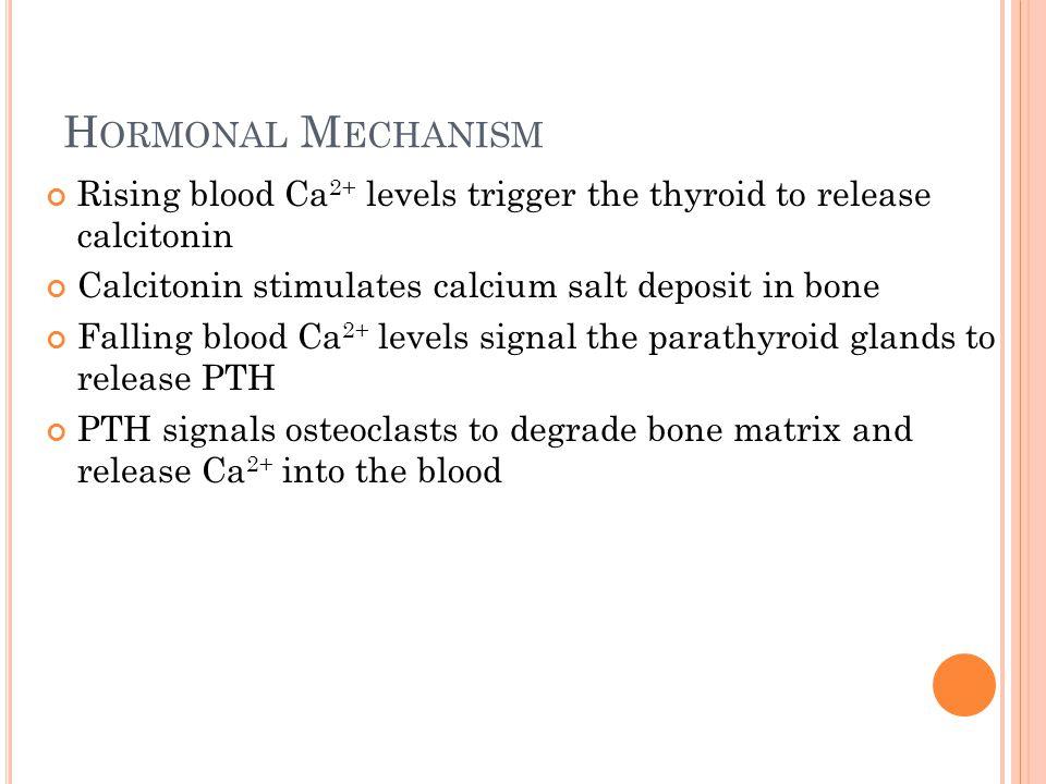 H ORMONAL M ECHANISM Rising blood Ca 2+ levels trigger the thyroid to release calcitonin Calcitonin stimulates calcium salt deposit in bone Falling bl