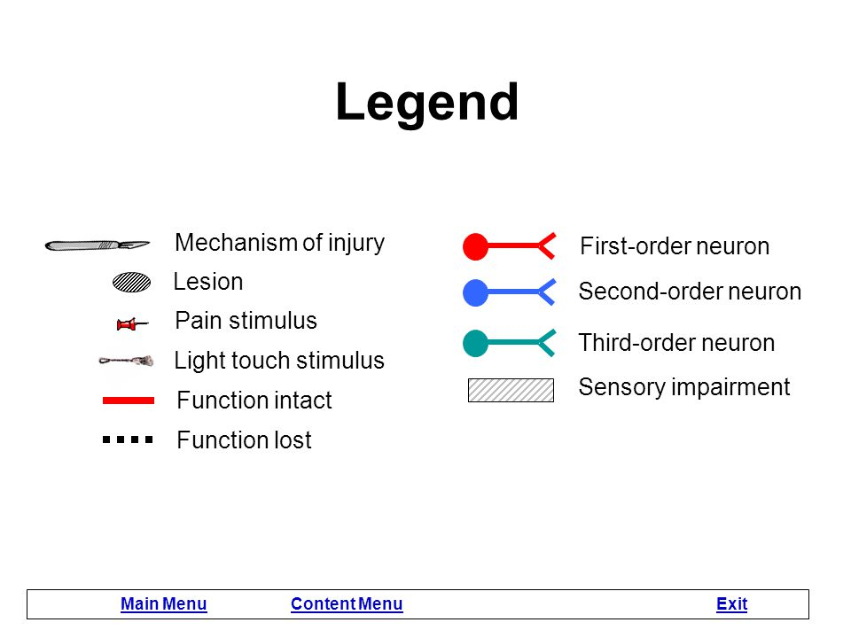 Instructions This module contains 9 interactive lesion lessons with animation. Lesson lessons begin with a question about the symptoms produced by tha