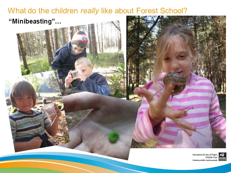 What do the children really like about Forest School? Minibeasting…